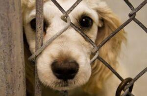 چه کسانی از اختلال حیوان آزاری رنج میبرند؟