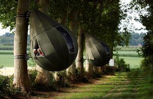 عکس/ اقامتگاه درختی در بلژیک