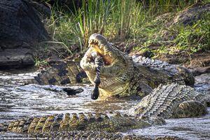 تکذیب وجود تمساح در دریاچه چیتگر