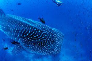 عکس/ شنا در یک قدمی نهنگ