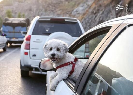 با سگ گردانی در اماکن عمومی برخورد میشود