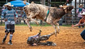 عکس/ شکار لحظهای خطرناک در گاو بازی