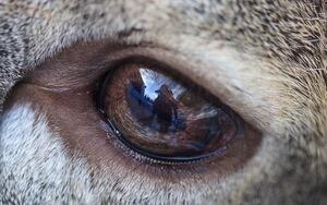 عکس/ نمای نزدیک از چشم آهو