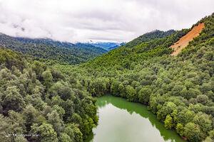 عکس/ طبیعت بکر در دل جنگلهای ساری