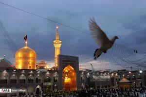 عکس/ روز زیارتی مخصوص امام رضا علیه السلام
