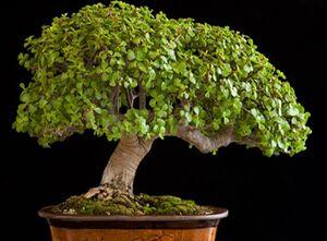 گیاهی مناسب برای نگهداری در آپارتمان