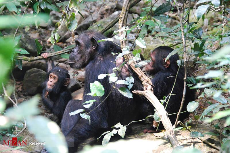 2855612 - عکس/ جذابترین پارکهای ملی تانزانیا