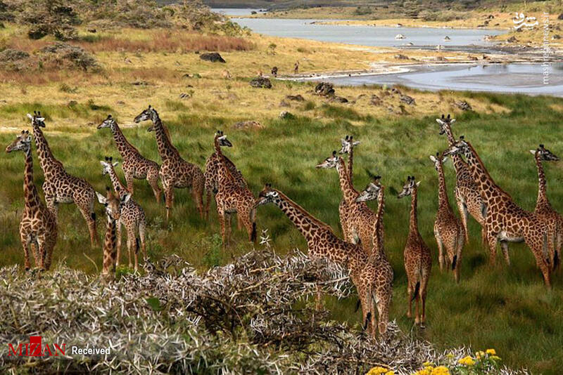 2855614 - عکس/ جذابترین پارکهای ملی تانزانیا