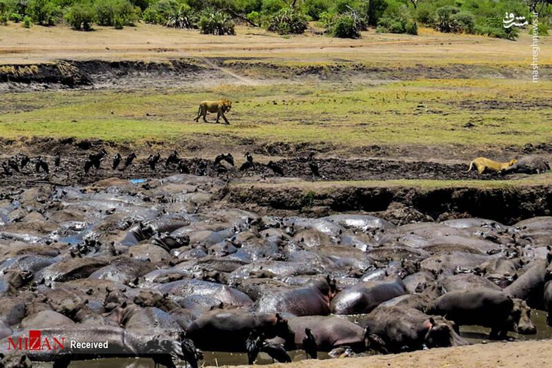 2855615 - عکس/ جذابترین پارکهای ملی تانزانیا