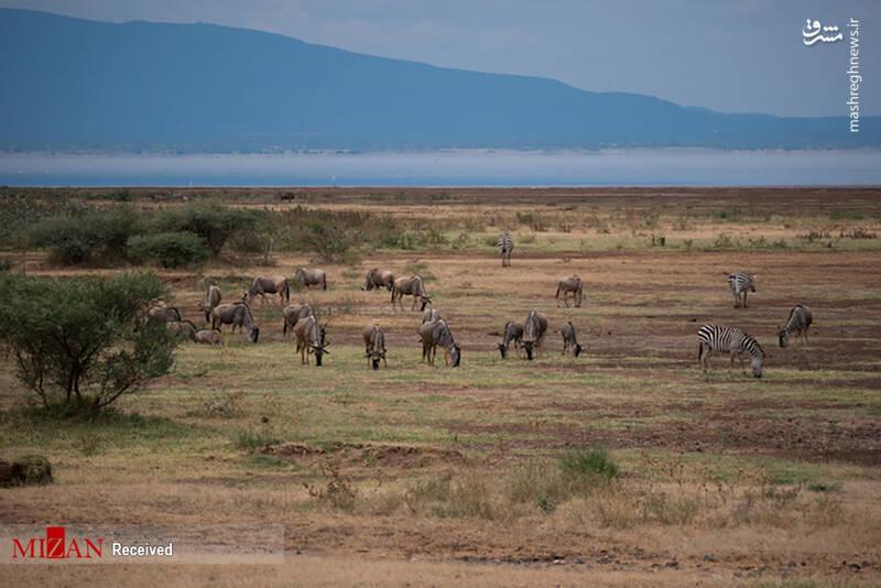 2855617 - عکس/ جذابترین پارکهای ملی تانزانیا