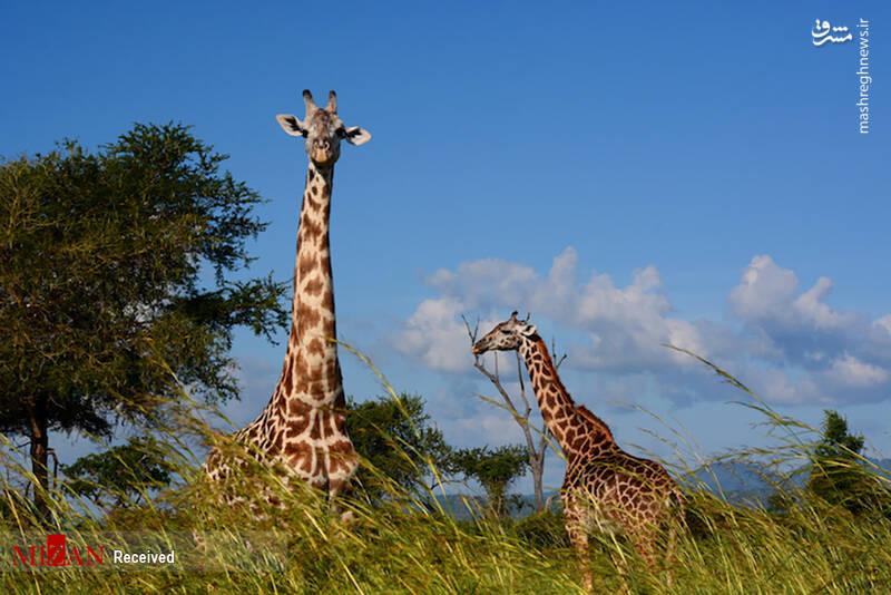 2855618 - عکس/ جذابترین پارکهای ملی تانزانیا
