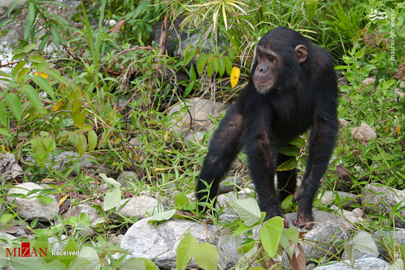 2855619 - عکس/ جذابترین پارکهای ملی تانزانیا