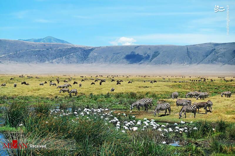2855620 - عکس/ جذابترین پارکهای ملی تانزانیا