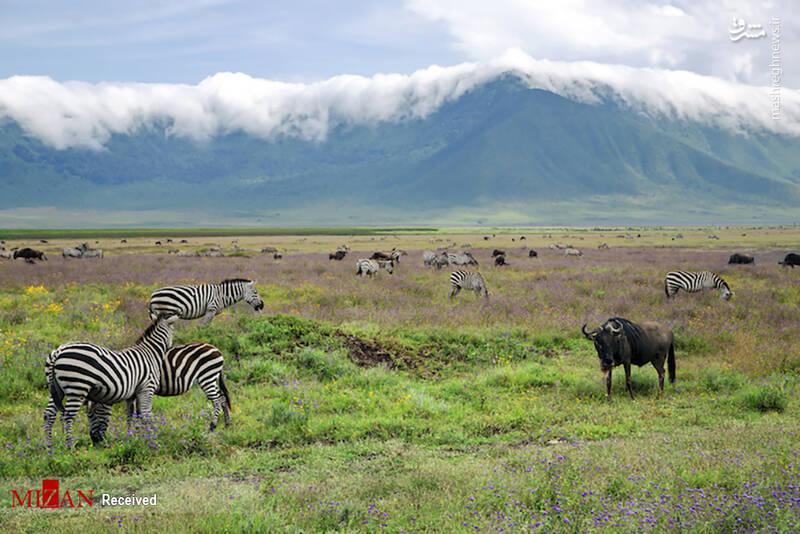 2855621 - عکس/ جذابترین پارکهای ملی تانزانیا