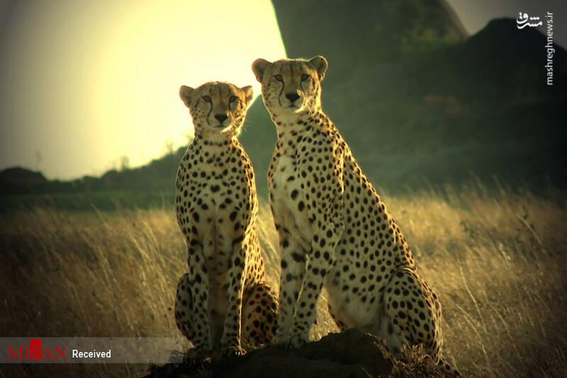 2855622 - عکس/ جذابترین پارکهای ملی تانزانیا