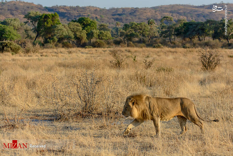 2855623 - عکس/ جذابترین پارکهای ملی تانزانیا