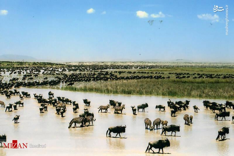 2855624 - عکس/ جذابترین پارکهای ملی تانزانیا