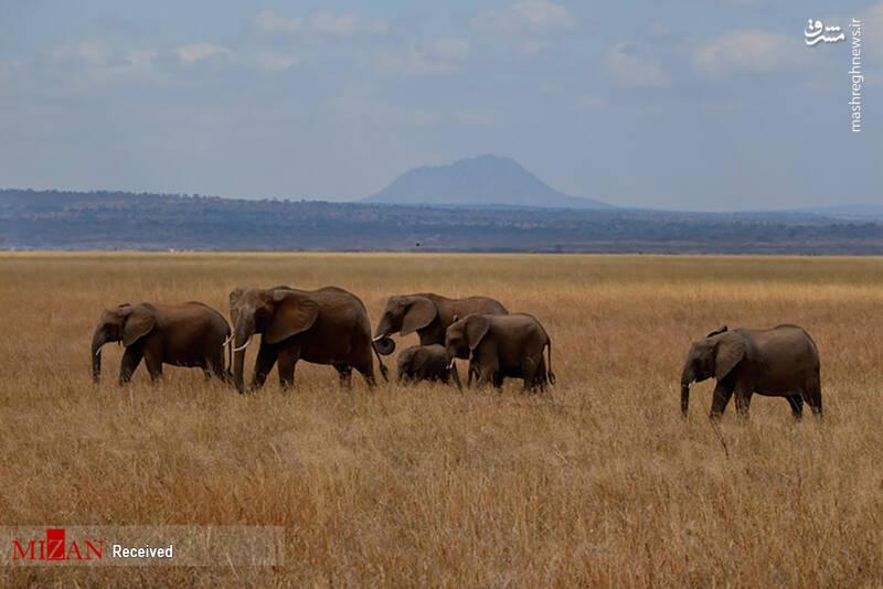 2855626 - عکس/ جذابترین پارکهای ملی تانزانیا