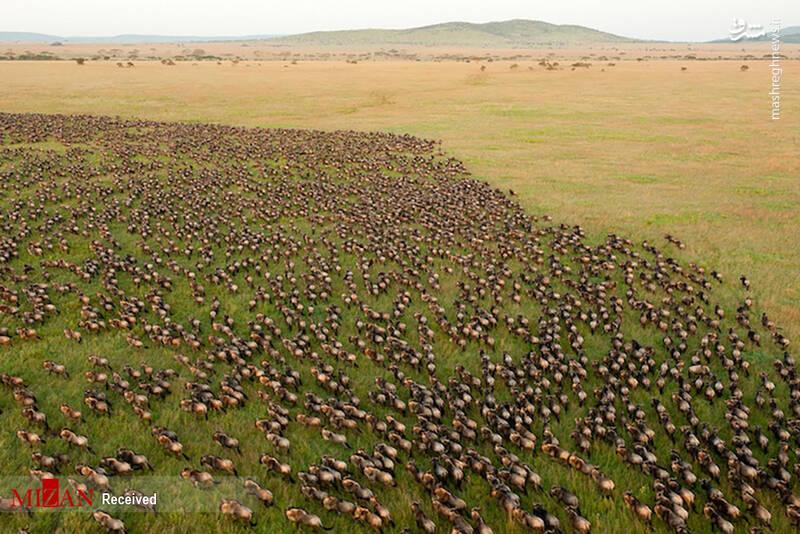 2855627 - عکس/ جذابترین پارکهای ملی تانزانیا