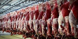 جزئیات خرید تضمینی گوشت از دامداران