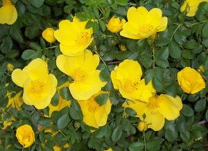 اثرات مفید این گیاه دارویی برای دستگاه گوارش