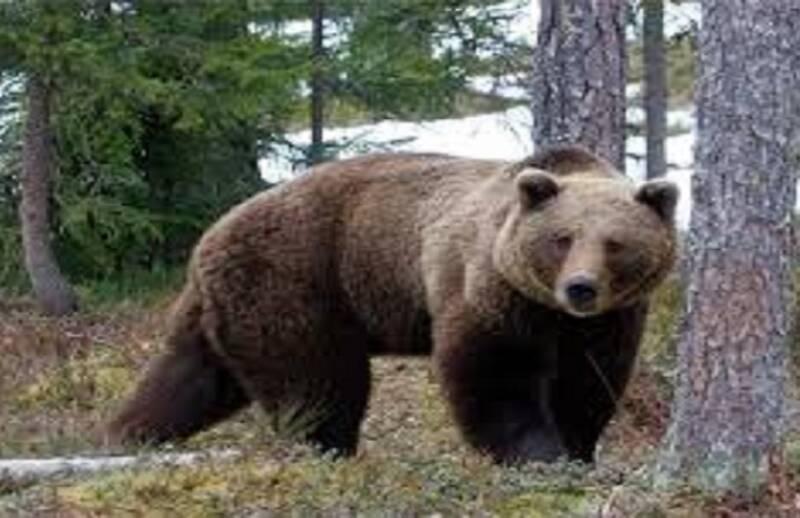 بالای درخت رفتن از ترس خرس ممنوع! +فیلم