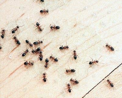 انواع حشرات خانگی و بهترین راههای دفع هر کدام