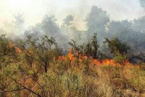 جزئیات جدید از آتشسوزی منطقه «گاچال»