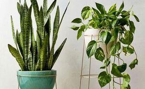 چقدر باید به گیاهان آب دهیم؟