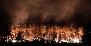 علت آتش سوزی جنگلهای کالیفرنیا چه بود؟
