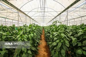 عکس/ گلخانههایی برای رونق صادرات