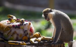 عکس/ پذیرایی تابستانه از حیوانات