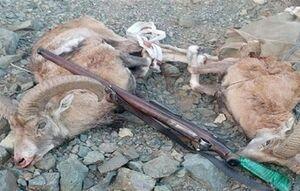 دستگیری شکارچیان قوچ وحشی