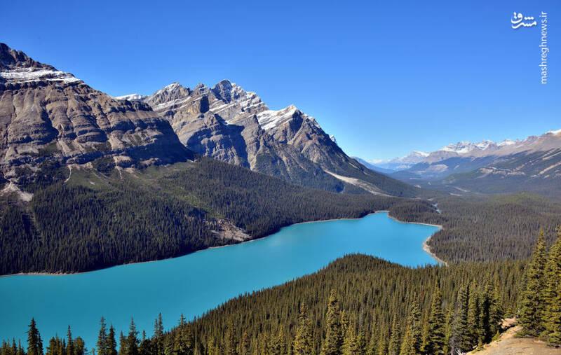 دریاچه پیتو در پارک ملی بانف در کانادا