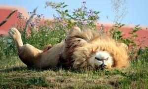 خواب جالب سلطان