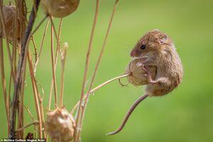 عکس/ دنیای جالب موشها