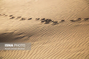 عکس/ کویری گم شده در دل آذربایجان