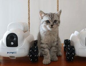 رباتی که حیوانات را سرگرم میکند