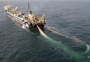 چرا از صید بیضابطه ماهیان غیرماکول در عمان جلوگیری نمیشود؟