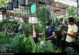 بازار گل تهران در روزهای کرونای