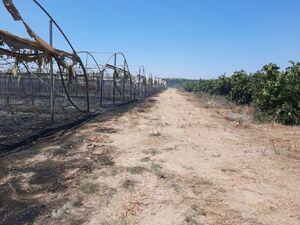عکس/ نابودی گلخانههای زراعی صهیونیستها