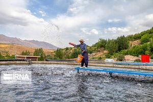 عکس/ پرورش ماهی در چهارمحال و بختیاری