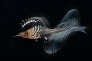 برترین عکسهای دنیا با موضوع پرندگان