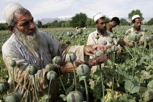 طالبان: آمریکا، افغانستان را منبع تولید موادمخدر کرده است