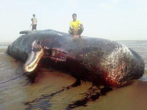 لاشه یک نهنگ در ساحل یک روستا