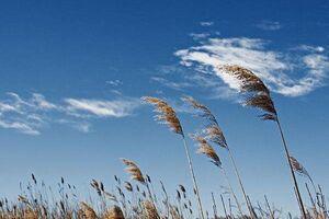 وزش باد شدید در شرق کشور در ۵ روز آینده