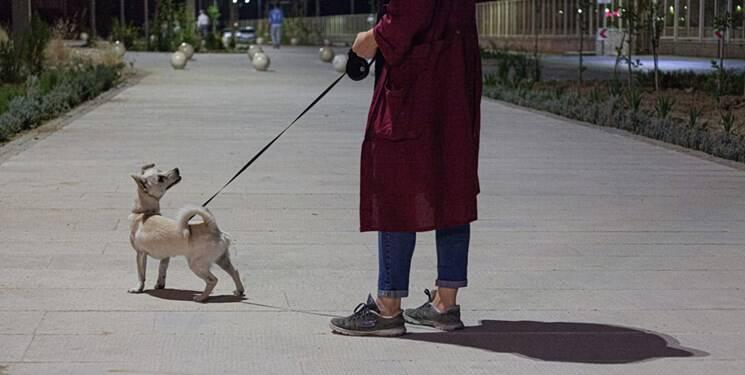 جولان سگها در پارک های تهران در روزهای کرونایی