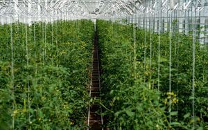گلخانهای که قصه آن با بقیه گلخانهها فرق دارد!