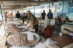آغاز صید میگو در بوشهر