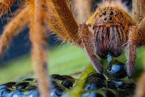 نمای نزدیک از عنکبوت
